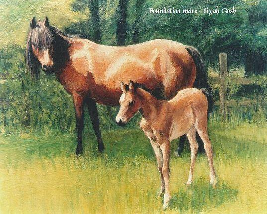 foundation Caspians , پایه نژاد اسب کاسپین