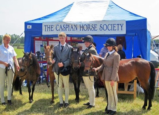 Caspian Horse Society