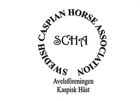 Swedish Caspian Horse Association