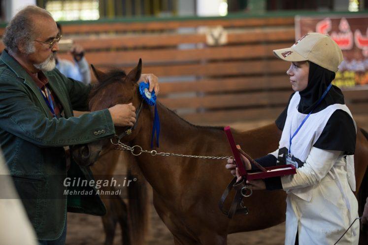 زیبایی اسب کاسپین