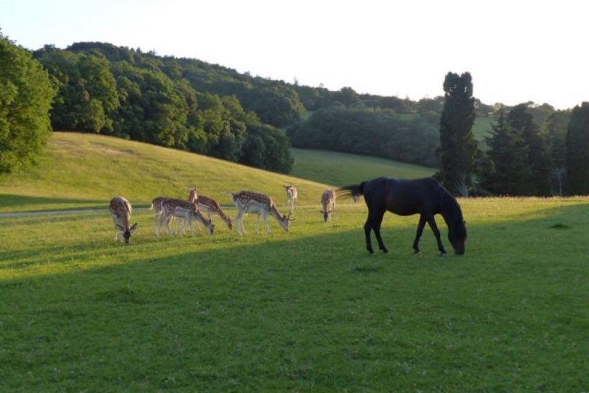 roxane caspiens , اسب کاسپین در فرانسه
