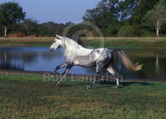 تشخیص رنگ در اسبچه خزر,Color discrimination in Caspian pony