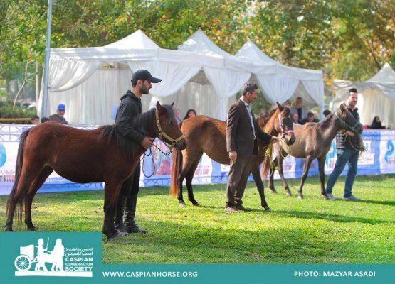 جشنواره اسب کاسپین