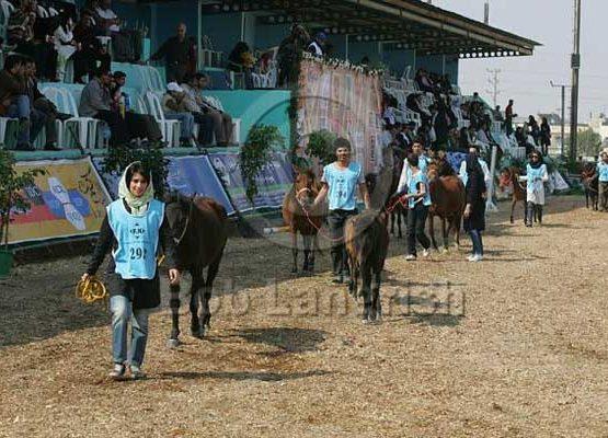 Caspian horse population