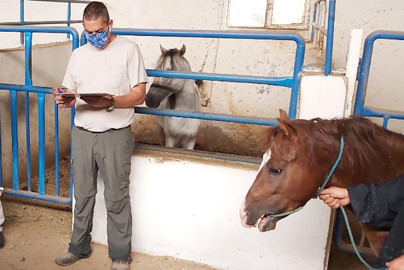 دومین دوره ارزیابی اسبهای کاسپین انجام شد