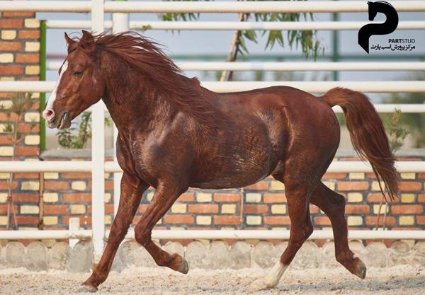 مقایسه اسب کاسپین
